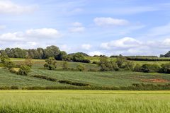 Country green fields, rural english countryside, Cotswolds . Green wheat farm fields, with a crossing country walking trails, hedgerow, woodland on the hill, in Royalty Free Stock Photos