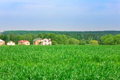 Green wheat field. With some houses on background stock photo