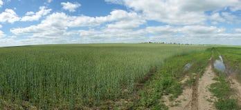 Free Green Wheat Field Stock Photos - 14742203