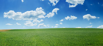 Free Green Wheat Field And Blue Sky Panorama Royalty Free Stock Images - 15022239