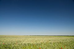 Green wheat field and blue sky Stock Images