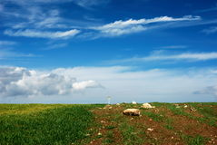 Green wheat field and blue sky. Scenic view of green wheat field in countryside with blue sky and cloudscape background stock photography