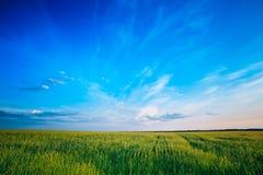 Green wheat field blue sky Stock Photo