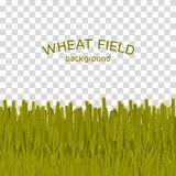 Green wheat field on checkered background. Colorful vector illustration Royalty Free Stock Photos