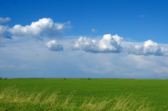 Green wheat field and clouds Stock Image
