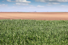 Green wheat field country landscape spring Stock Image