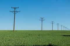 Green wheat field daytime agriculture land with traces and electric transfer wires pillars stock photo