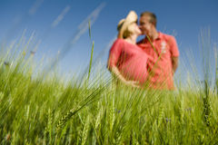 Green wheat field in the foreground and pregnant couple kissing Royalty Free Stock Photo