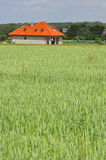 Green wheat field with a house Royalty Free Stock Photos
