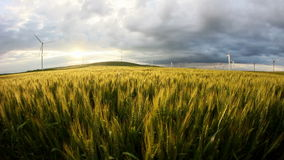 Green wheat field in motion with wind turbines in the background stock footage