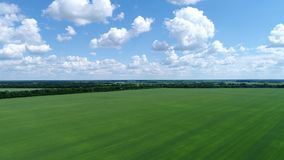 Green wheat field in Russia , top view. Green wheat field in Russia , a top view stock footage