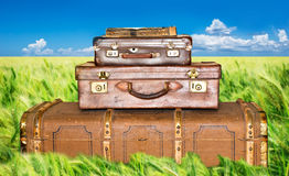 Green wheat field with three old leather suitcases Royalty Free Stock Photo