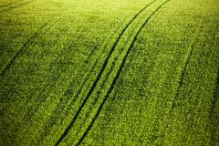 Green wheat field with tracks Stock Images