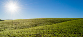 Green wheat field under the morning sun Royalty Free Stock Photography