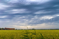 Green wheat field under stormy dramatic skies on Belgian coast Royalty Free Stock Photos