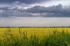 Green wheat field under stormy dramatic skies on Belgian coast Stock Image
