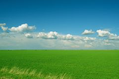 Green wheat field and white clouds Royalty Free Stock Image
