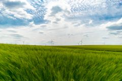 Green wheat field with wind turbines in background wallpaper stock image