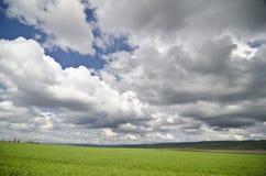 Green wheat fields Stock Photography