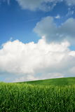 Green Wheat Fields Royalty Free Stock Images