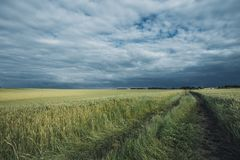 Green wheat fields on a cloudy day. Picturesque dramatic sky. Countryside landscape, agricultural fields, meadows and. Farmlands in summer. Environment friendly Royalty Free Stock Images