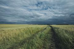 Green wheat fields on a cloudy day. Picturesque dramatic sky. Countryside landscape, agricultural fields, meadows and. Green wheat field on a cloudy day Royalty Free Stock Image