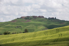 Green wheat fields in the hills of Tuscany Royalty Free Stock Image