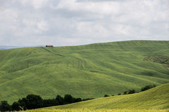 Green wheat fields in the hills of Tuscany Stock Photography