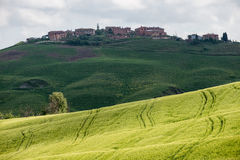 Green wheat fields in the hills of Tuscany Stock Images