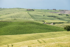 Green wheat fields in the hills of Tuscany Royalty Free Stock Images