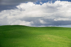 Green wheat fields in the hills of Tuscany Royalty Free Stock Photos