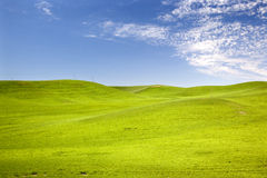 Green Wheat Grass Blue Skies Palouse Washington Royalty Free Stock Photography