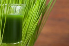 Wheat grass juice. Detox and fitness concept. Superfood. Green wheat grass juice. Detox and fitness concept. Superfood royalty free stock image
