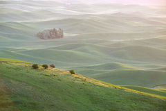 Green wheat hill from palouse Royalty Free Stock Photography