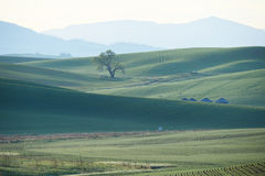 Green wheat hill from palouse Royalty Free Stock Photos