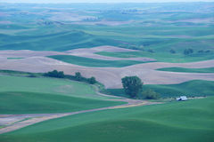 Green wheat hill from palouse Royalty Free Stock Images