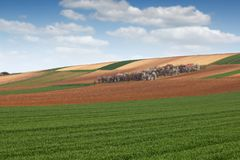 Green wheat and plowed fields farmland Stock Images