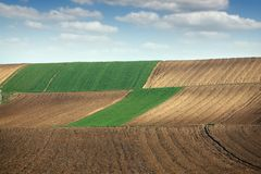 Green wheat and plowed fields Stock Image