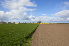 Green wheat and plowed soil Stock Images