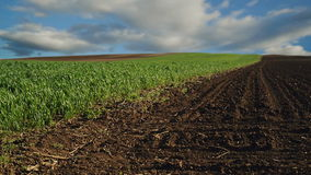 Green Wheat Sprouts Field and Arable Land in Agricultural cultivated field, Timelapse Clouds in Background stock footage