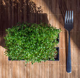 Green wheat sprouts with fork on the bamboo table Royalty Free Stock Photos