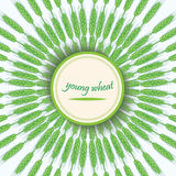 Green wheat stalks. Young wheat germ. Vector banner.Circular ornament with spike Royalty Free Stock Photos