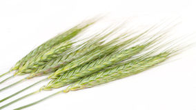 Green wheat. On white Background Stock Photo