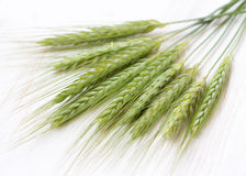 Green wheat. On white Background Stock Image