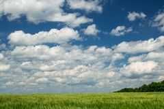 Green wheaten sprouts are in the field and beautiful cloudy. Spring landscape stock photos