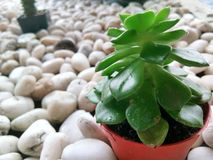 green white royaltyfri foto