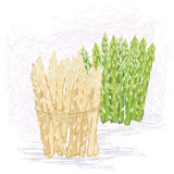 Green and white asparagus Stock Photos