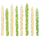 Green and white asparagus isolated Royalty Free Stock Images