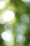Green and white blurry background Stock Photography