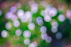 Green white Bokeh background,Abstract backgrounds. Nobody, blurred. Summer Royalty Free Stock Images